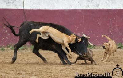 Escándalo en Portugal por imágenes publicadas por el torero João Moura