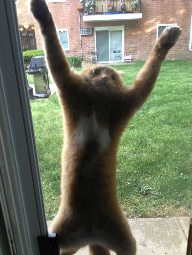 Este gato que decidió que iba a perseguir a la mariposa de la puerta mosquitera.