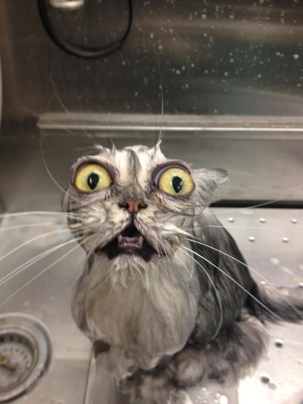 Este gato que decidió que había dejado el ser humano le da un baño de una sola vez.